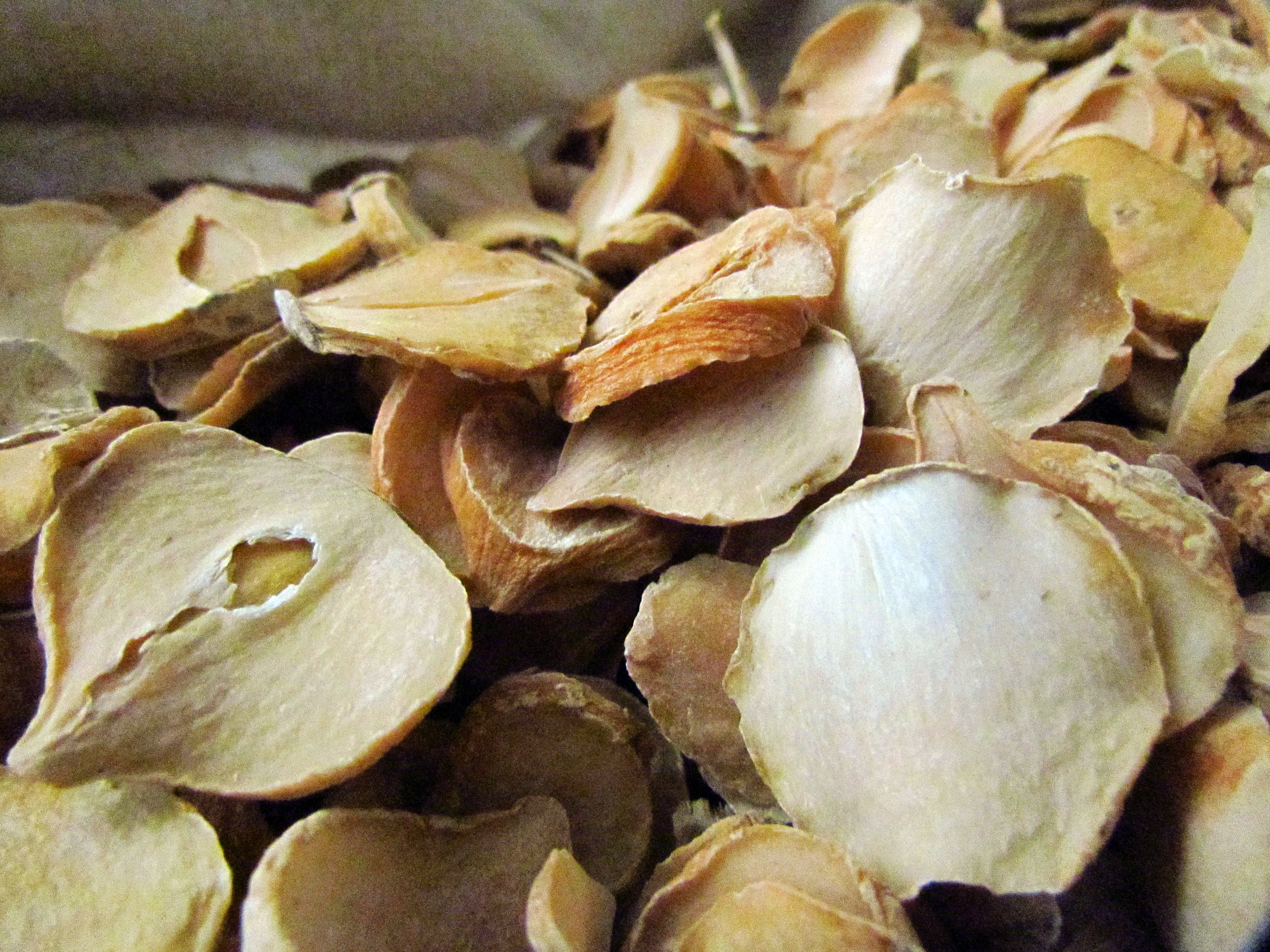 Persian shallot could help fight TB antibiotic resistance