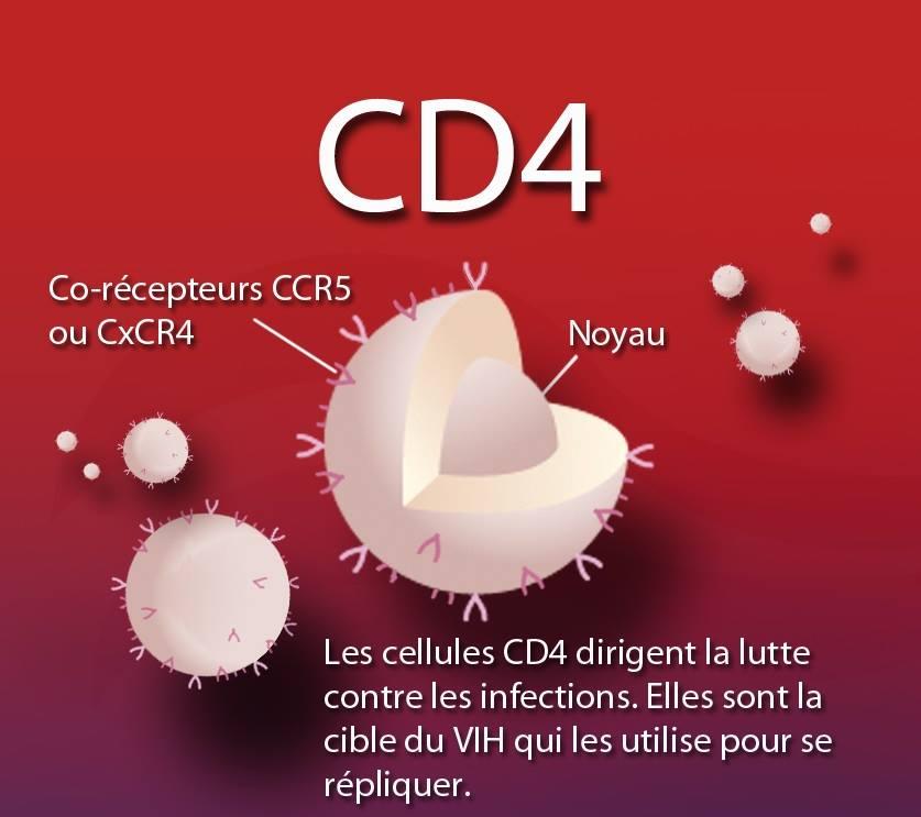 تعداد سي دي 4 (CD4) و علاقته مع تطور الإصابة