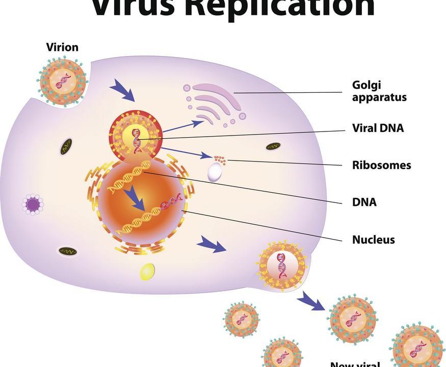 Ученые впервые описали процесс взаимодействия bNAb 10E8 с белком слияния ВИЧ