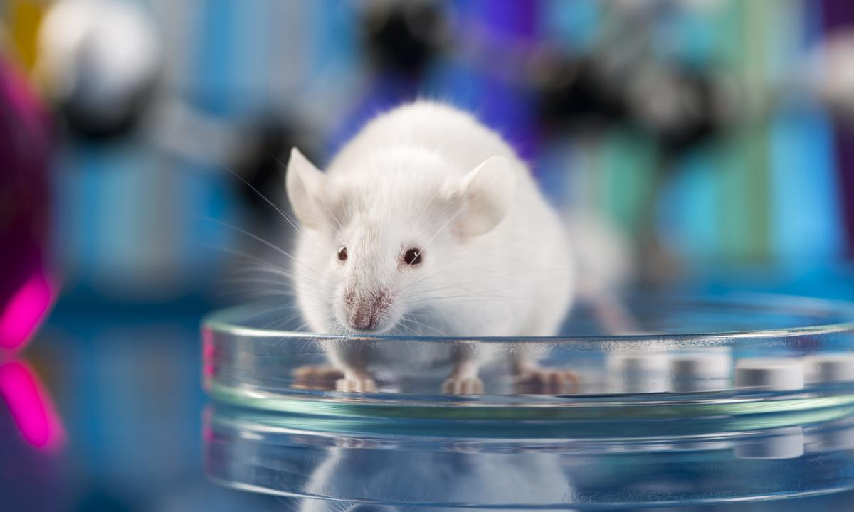 Great achievement in the fight against HIV: the virus was eliminated in mice DNA - poză 1