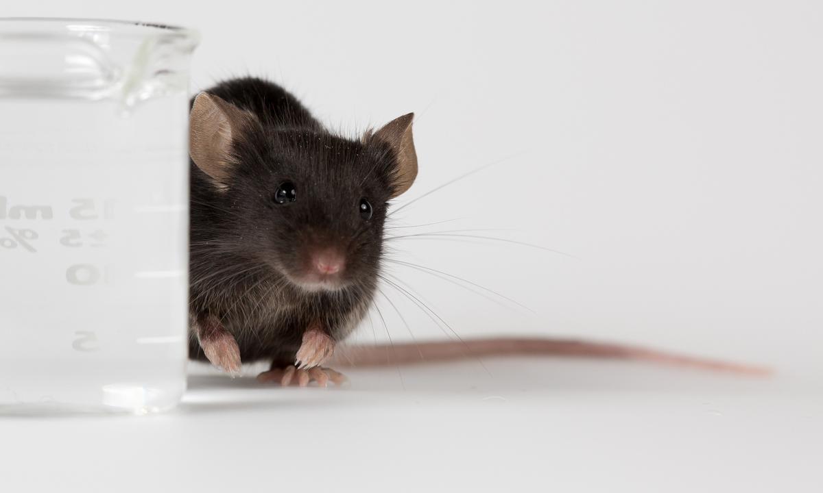 Первый биоразлагаемый имплантат с АРВТ испытан на животных