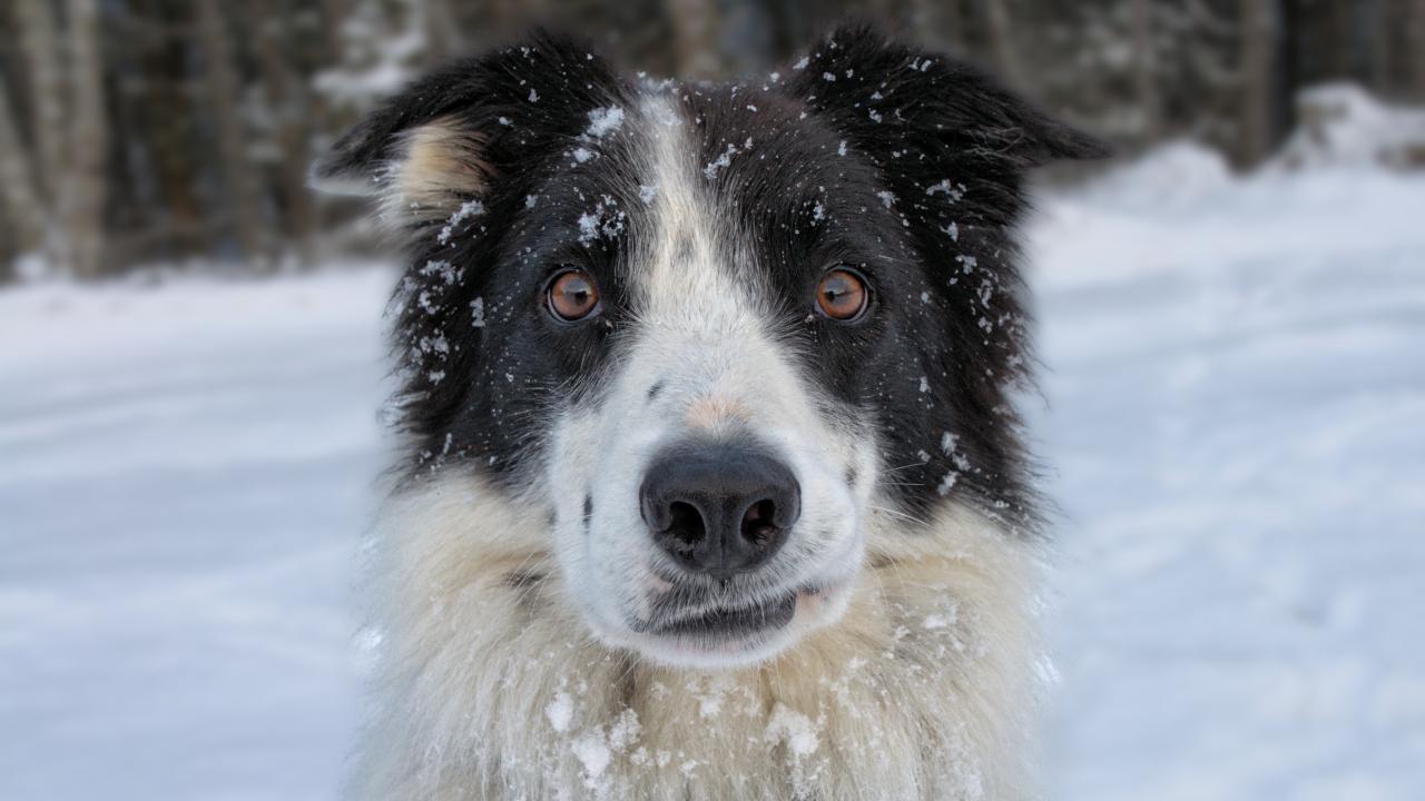 Собаки могут помочь ВИЧ-положительным людям избавиться отдепрессии - изображение 1