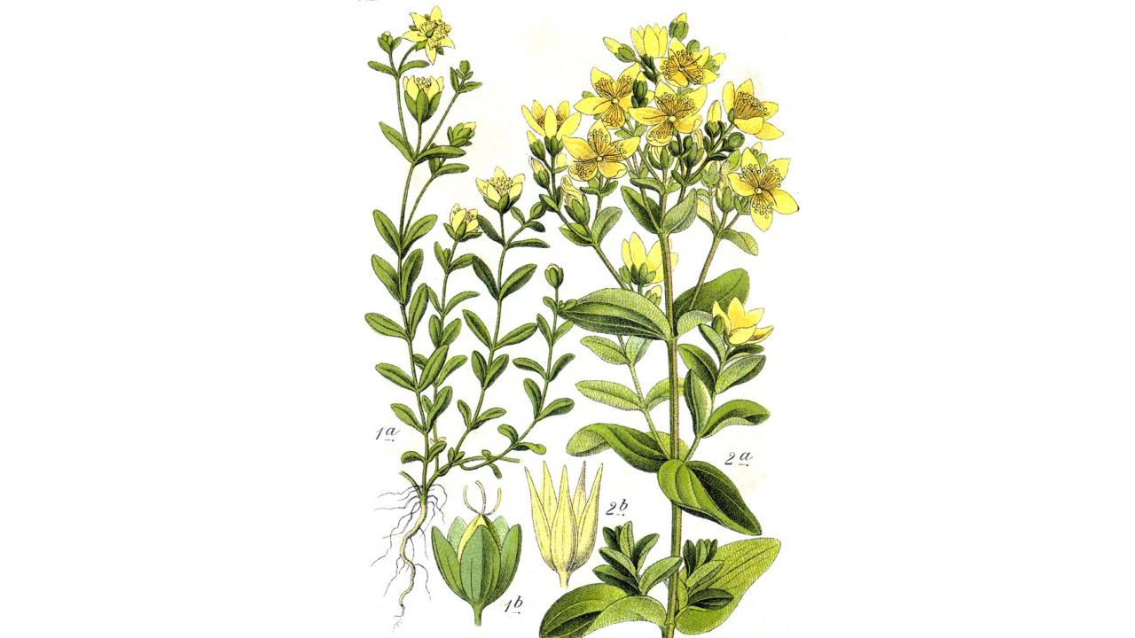 Принимать лекарственные травы вместе с обычной терапией может быть опасно - изображение 1