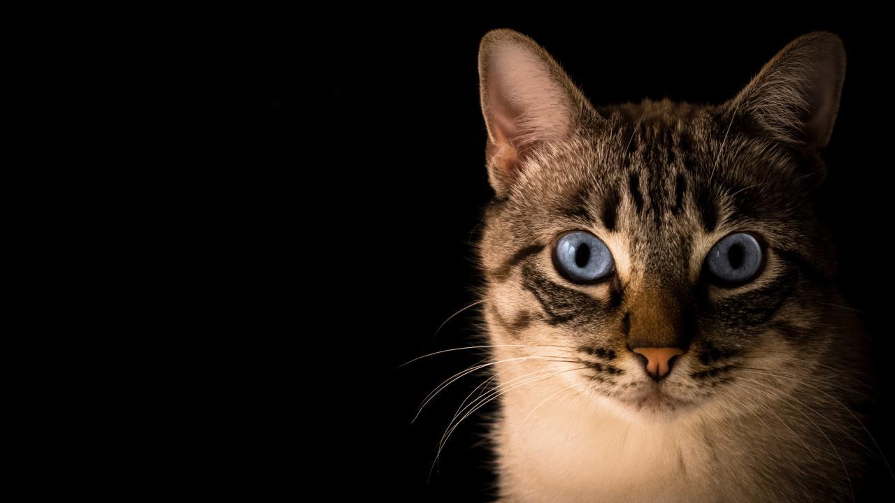 Кошки могут помочь в разработке противовирусных препаратов для людей, живущих с ВИЧ - изображение 1