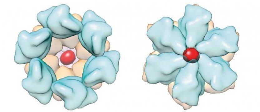 Суперкомпьютерное моделирование открывает двери для разработки новых методов лечения ВИЧ, - ученые - изображение 1