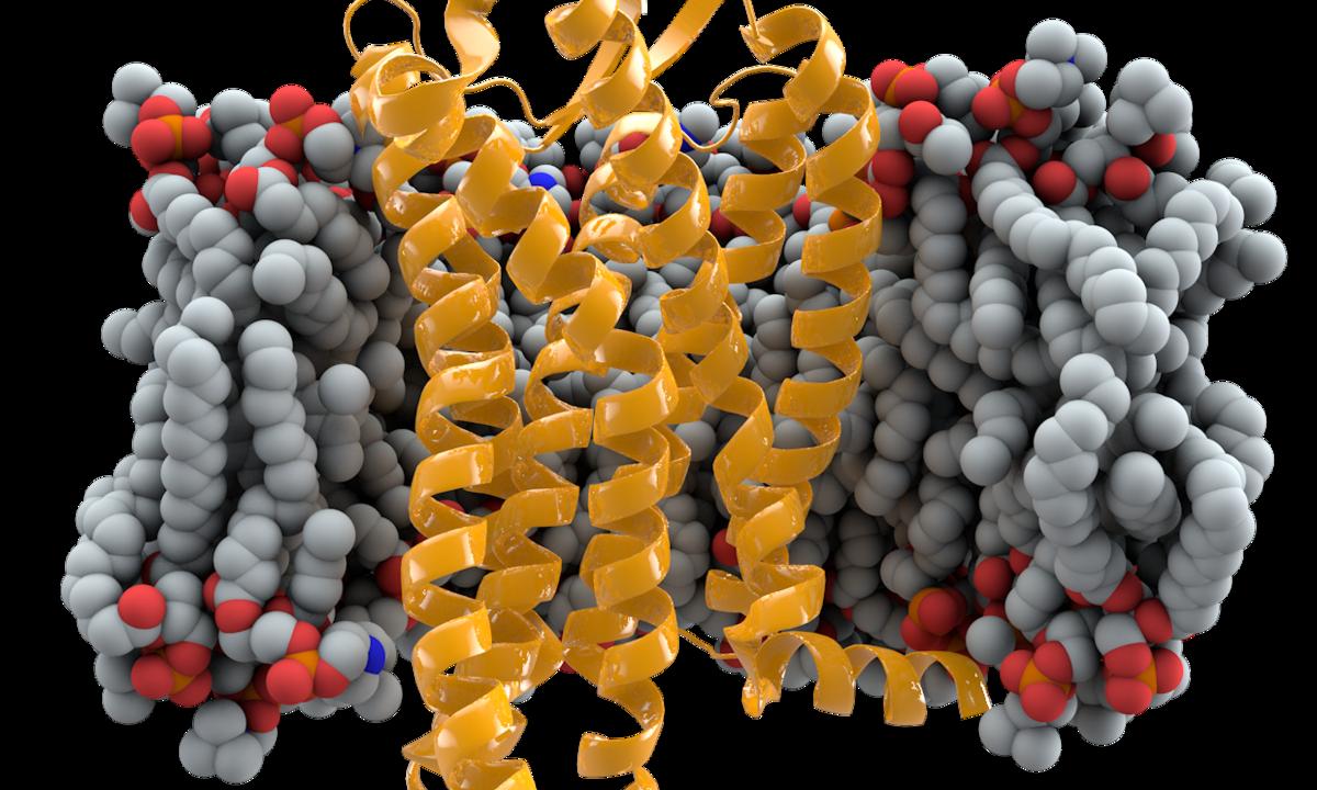 Российские ученые создали устойчивые к ВИЧ человеческие эмбрионы - изображение 1