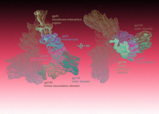 Модифицированные лимфоциты продемонстрировали эффективность в борьбе с ВИЧ