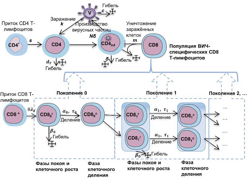 Ученые предложили использовать PD-L1-иммунотерапию для лечения ВИЧ - նկարը 1