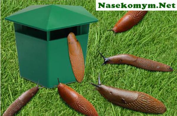 Nasekomym.net - фото 15
