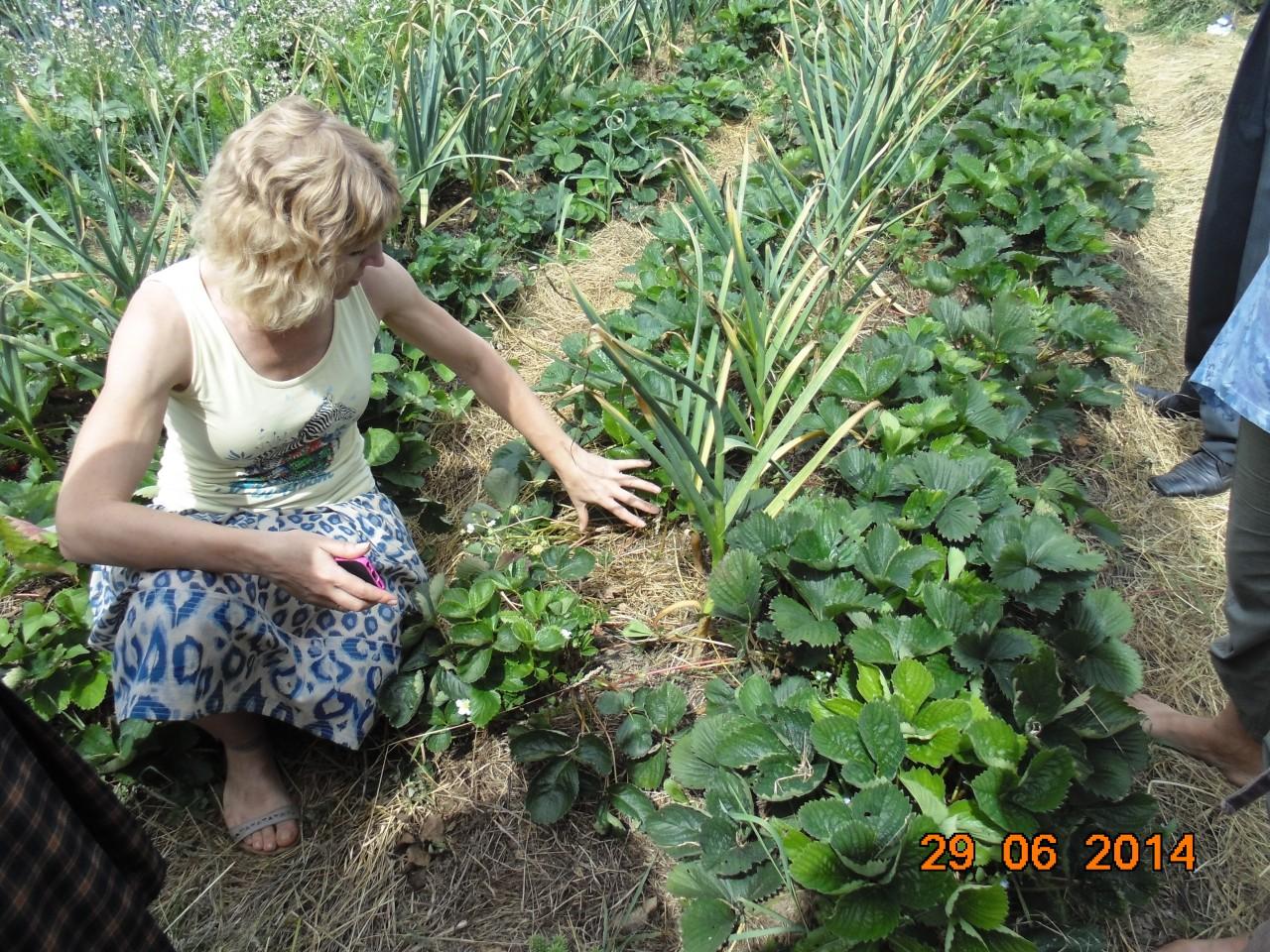 """Клуб природного землеробства і здорового способу життя """"Земледар"""" - фото 13"""