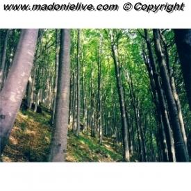 Forestali, venti sindaci contro la regione