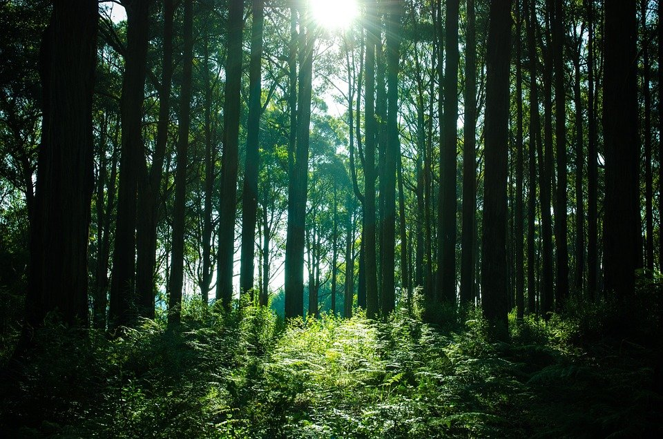 nacional'nyj park bashkirija foto