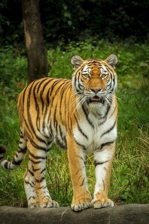 nac park zov tigra