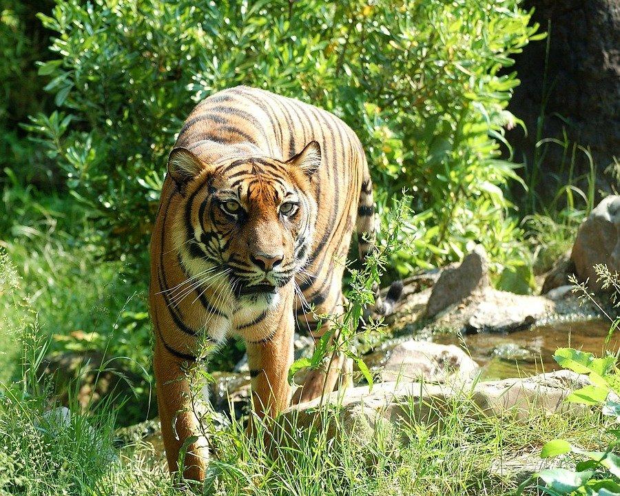 nacional'nyj park rossii zov tigra