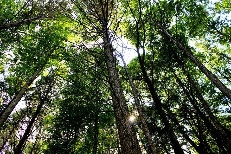 nacional'nyj park meshhera vladimirskaja oblast'
