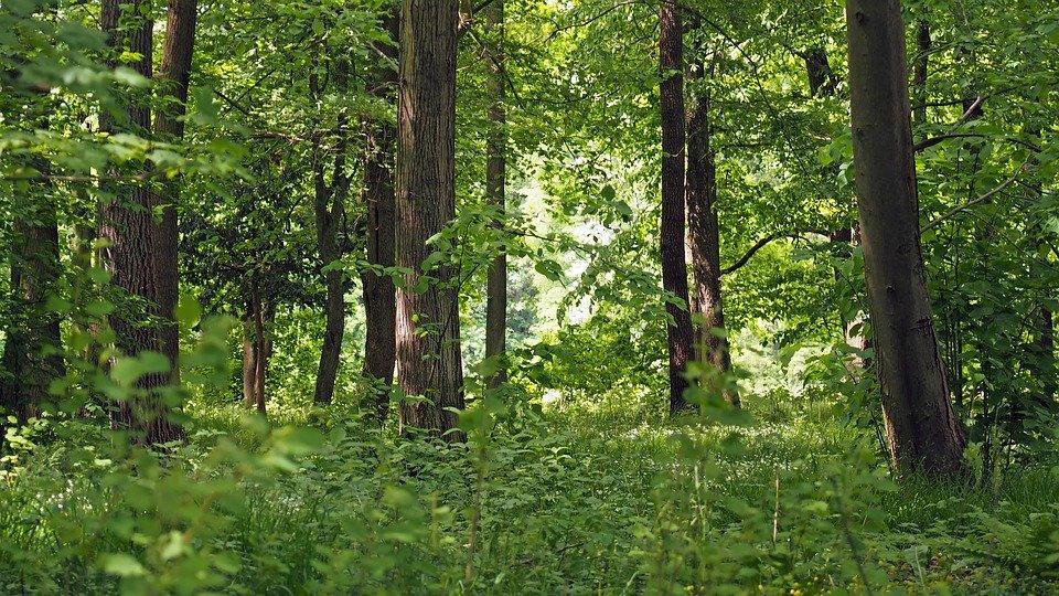 sebezhskii` natcional`ny`i` park pskovskaia