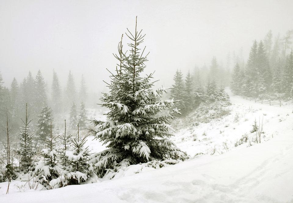 otdyh_adygee_zimoj_ceny