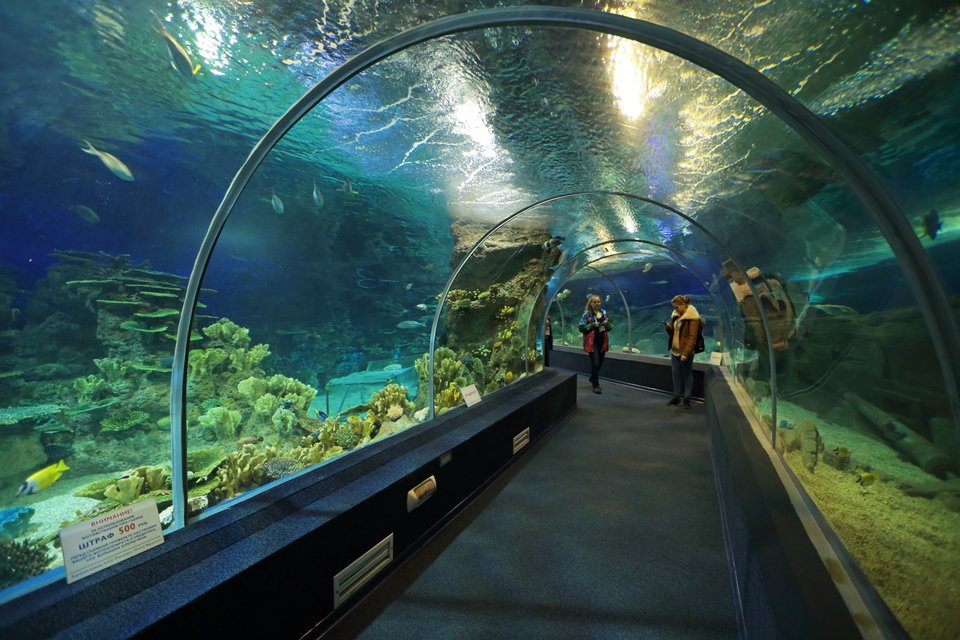 sochinskij_okeanarium_sochi _discovery_world_aquarium