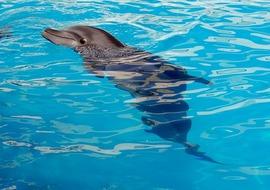 Dolphin 1138753 640