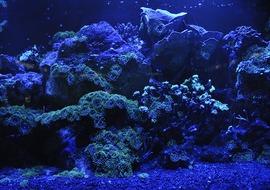 Coral reef 692957 640