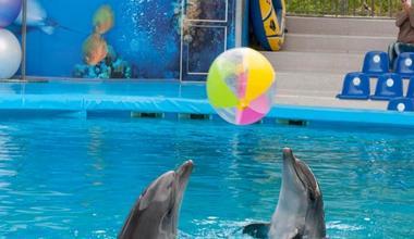 Sochinskiy delfinariy v rivere