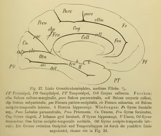Illustrazione da Heirich Obersteiner, Anleitung beim Studium des Baues der nervösen Centralorgane im gesunden und kranken Zustande (Toeplitz & Deuticke, Leipzig und Wien, 1888)