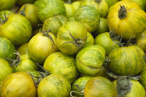 La Green Zebra, une variété de tomate incontournable