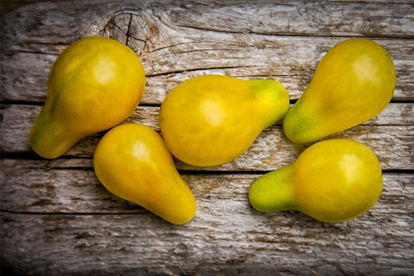 La yellow pearshapped, une variété de tomate insolite