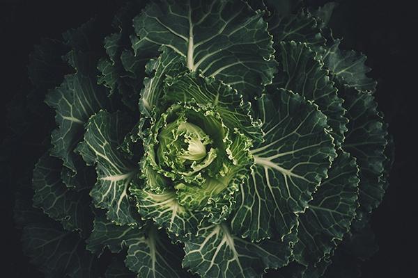 Le chou : tout savoir sur ce légume aux multiples variétés
