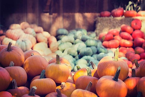 Courges : le monde merveilleux des légumes de l'automne