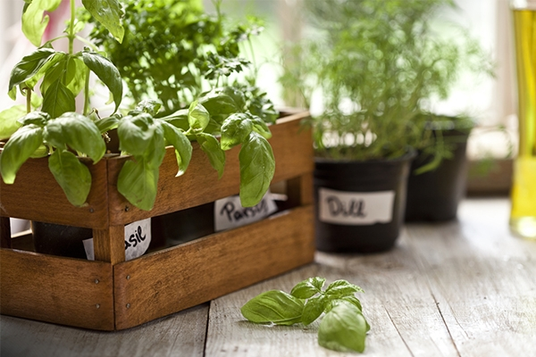 Top 10 des herbes aromatiques pour cuisiner