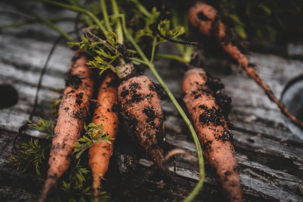 Pourquoi et comment Quitoque s'engage pour réduire le gaspillage alimentaire