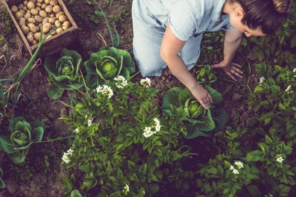 La notation environnementale des aliments