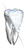 GPNZ Gesellschaft für Praxisnachfolge in der Zahnmedizin GmbH