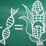 Er GMO smart – eller noget vi skal være nervøse for?