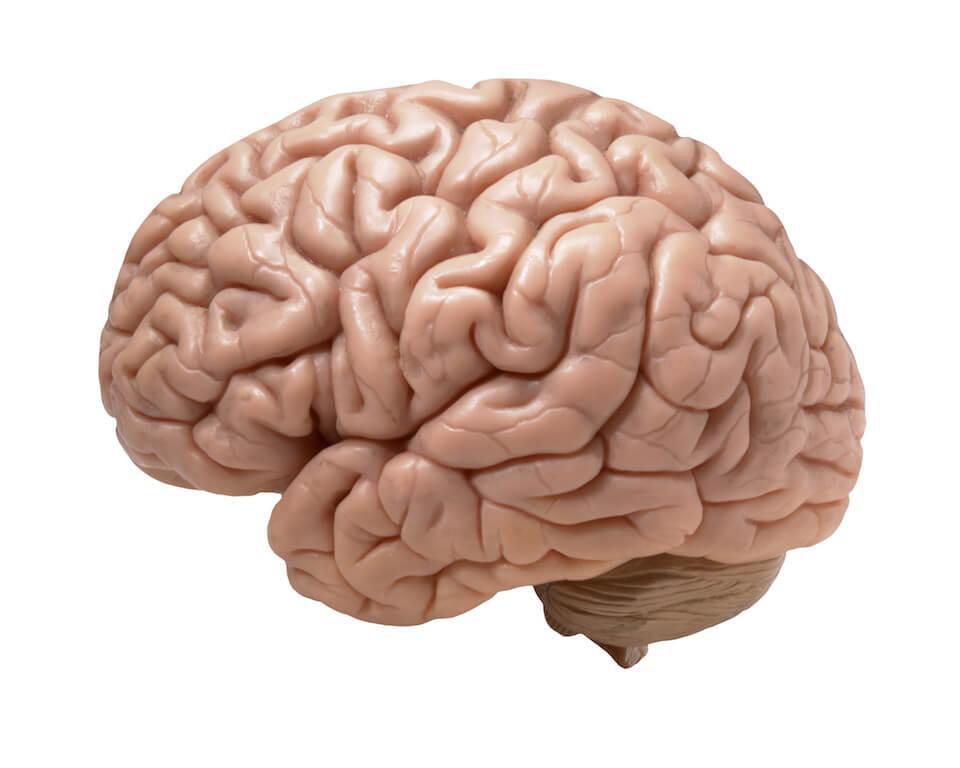 hjernen styrer vægten sådan styrer du hjernen