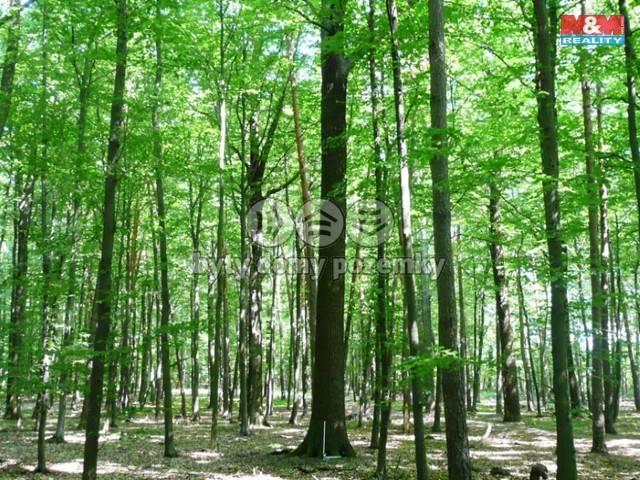 Les na prodej, Vršovice