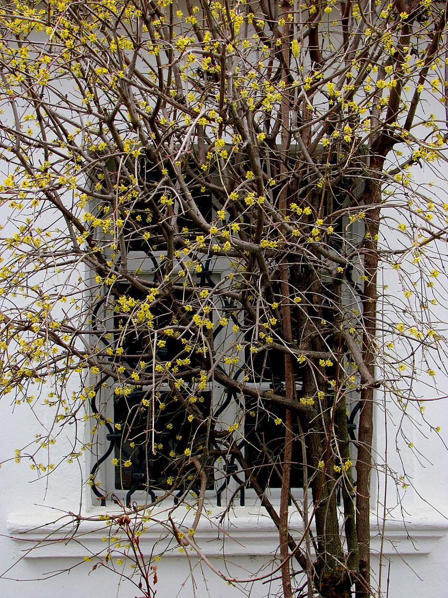 Somvirágos ablak