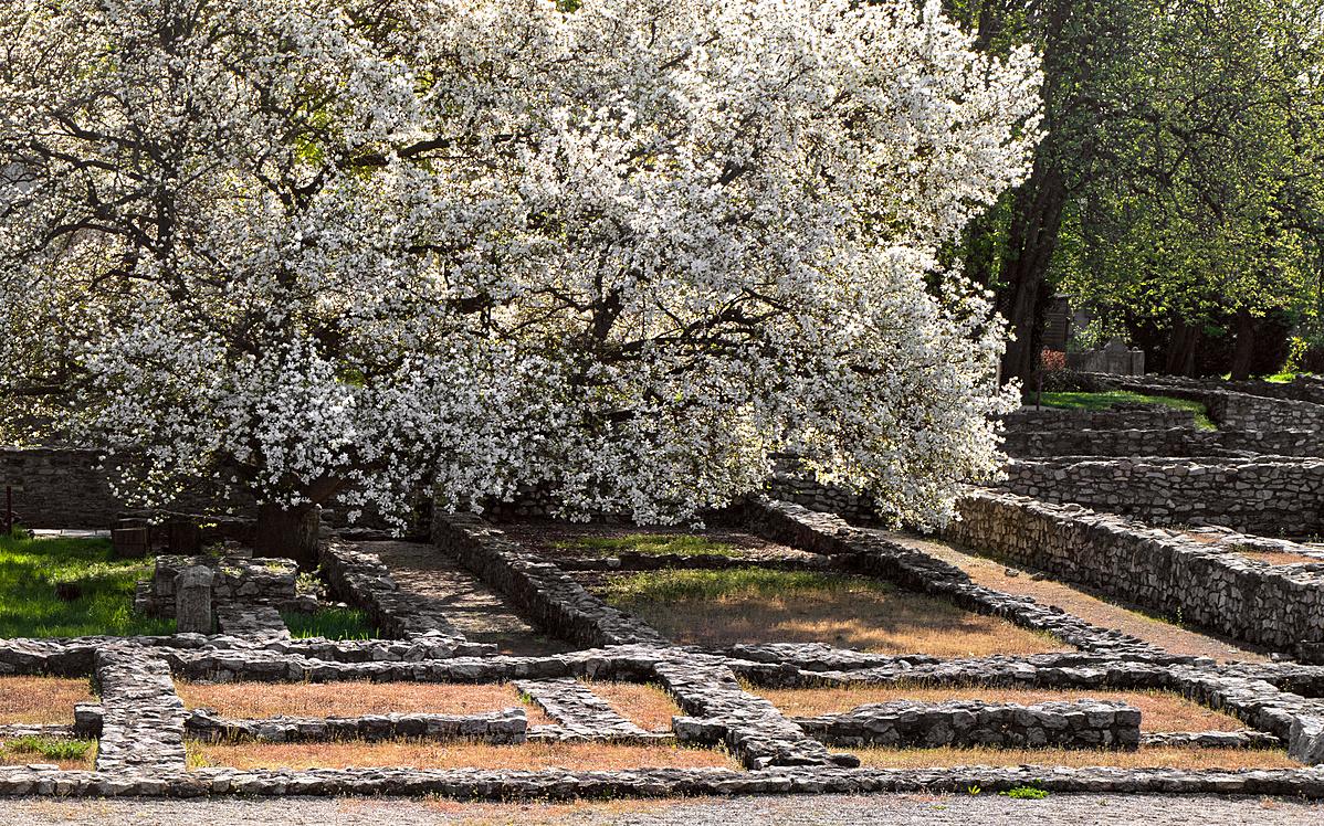 Floralia ünnep Aquincumban