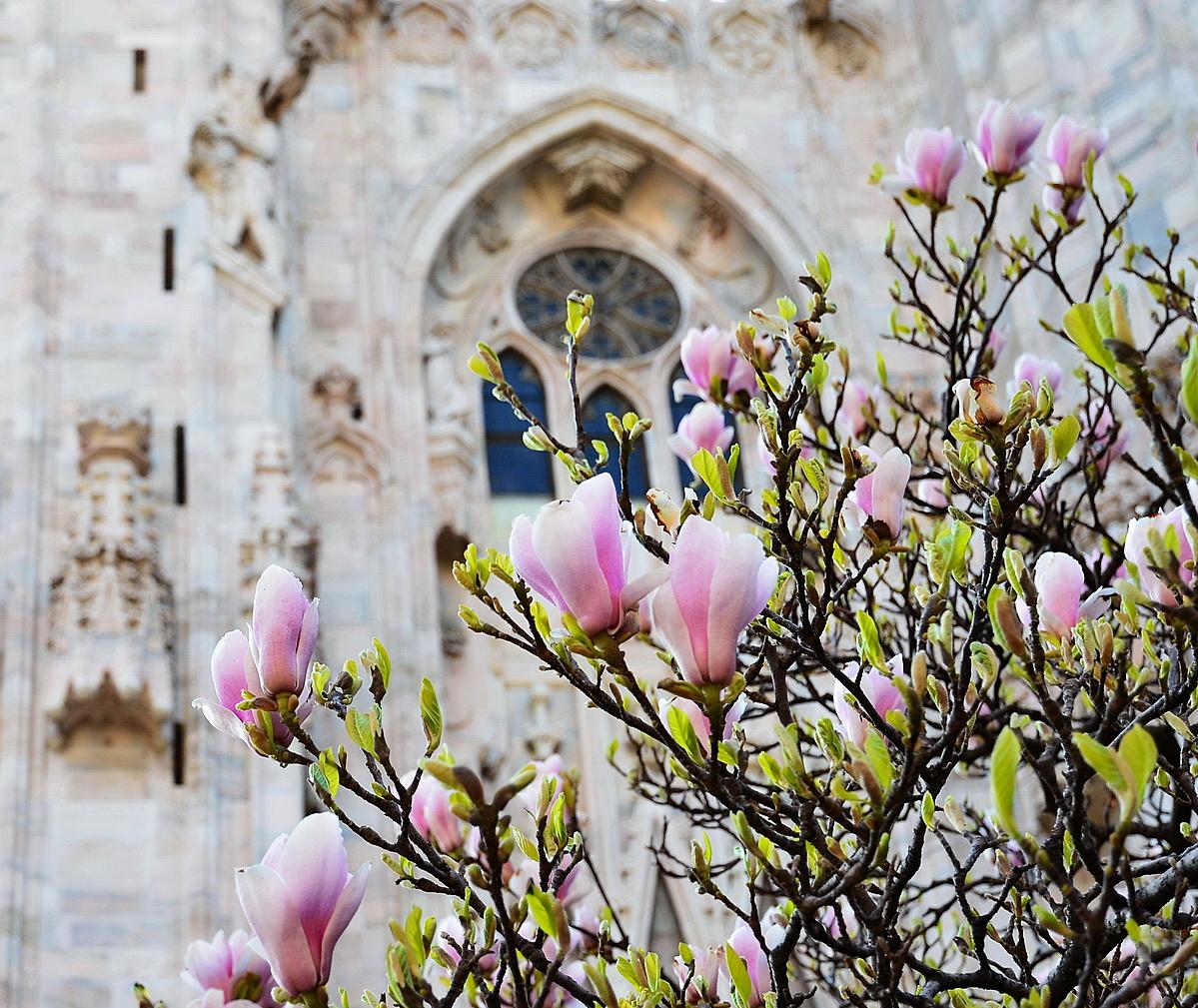 Olasz Tavasz