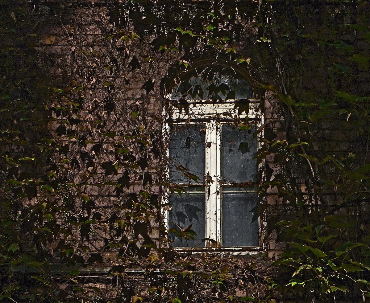 Csipkerózsika ablaka