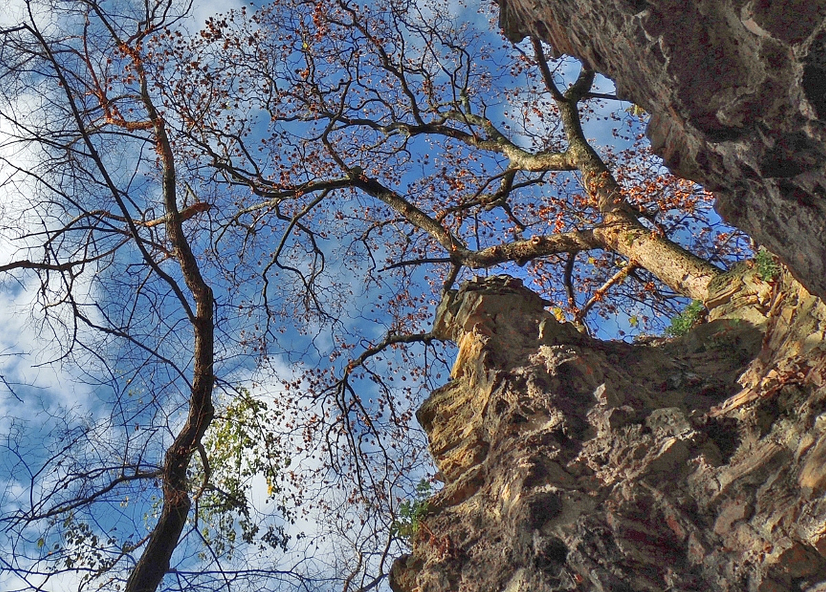 Romtemplom a fák alatt