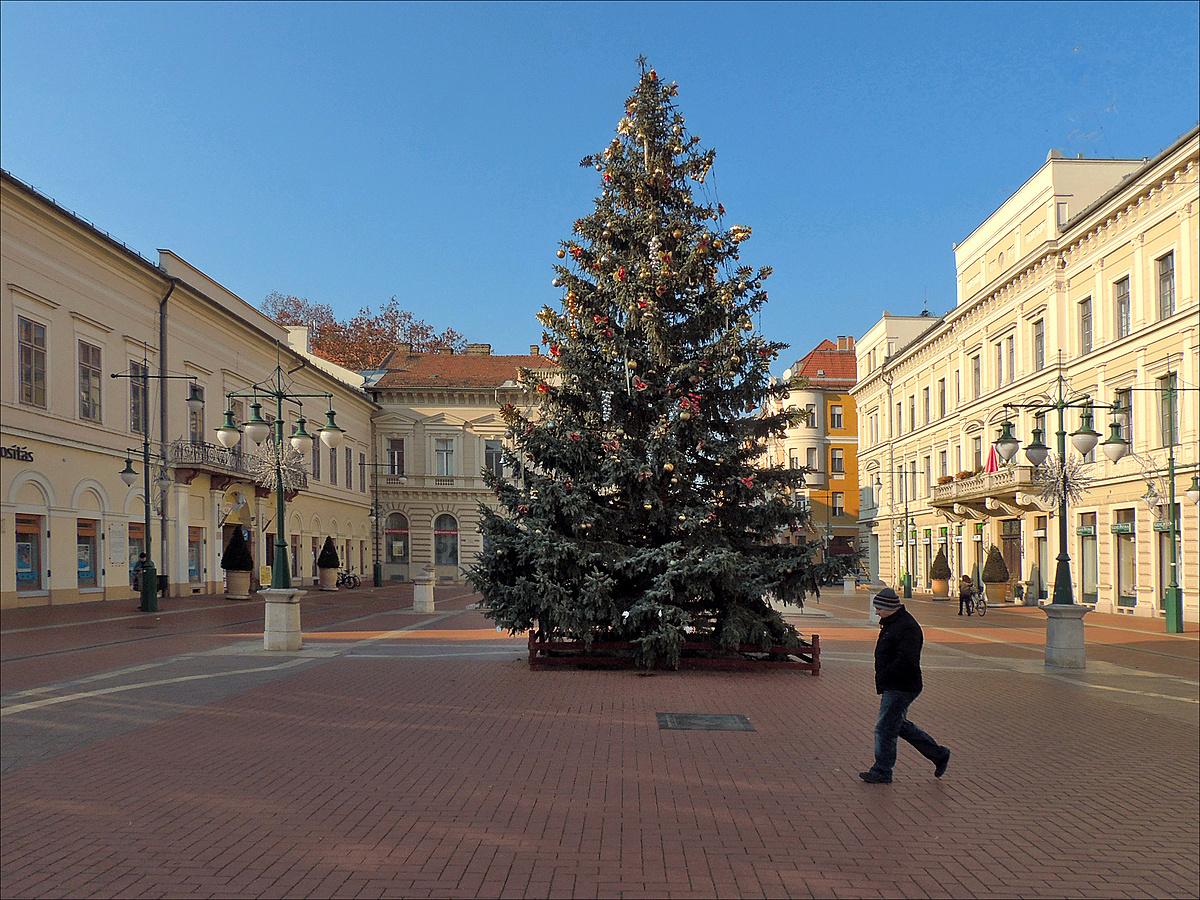 Karácsonyfa mindenkinek
