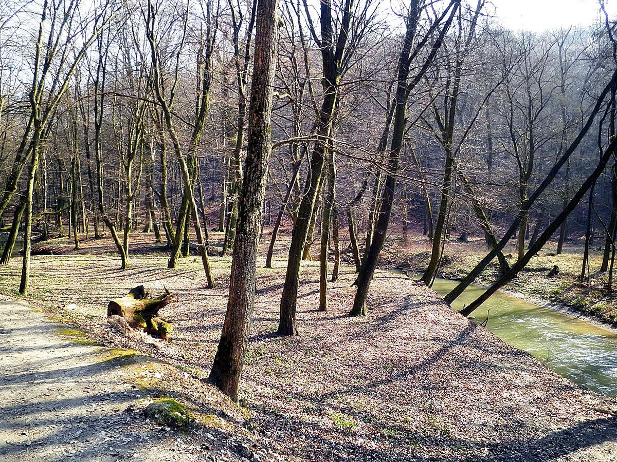 Éled az erdő