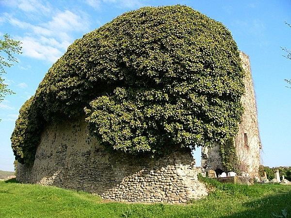 A középkori plébániatemplom romja