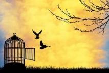 כמו ציפור את חופשיה - פרק 16