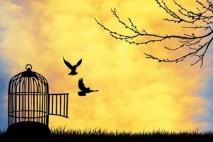 כמו ציפור את חופשיה - פרק 18