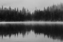 יער המחשבות