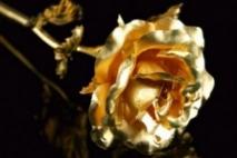 ורד מזהב - חלק ראשון