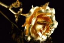 ורד מזהב - חלק שני